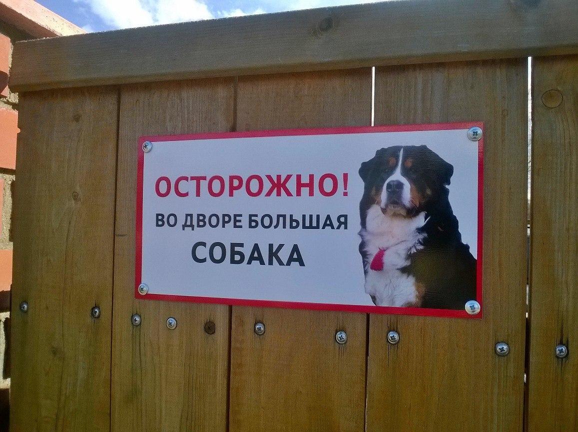 картинки с осторожна собака не стерильна себя настоящим